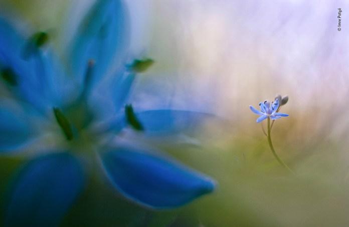 tavaszi látomás