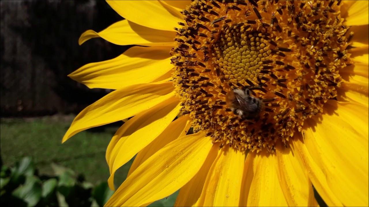 méh pollen és látás)