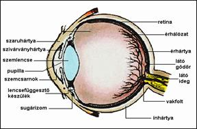 Mutet utani allapot - A szem betegségei