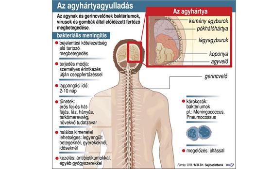 Kullancs okozta kórok - Figyelje a tüneteket!