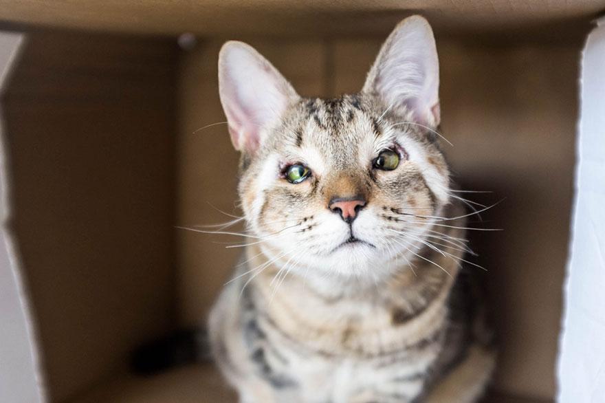 A nagy cicaszótár – Avagy így kommunikál veled a macskád