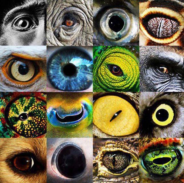 a szem látása)