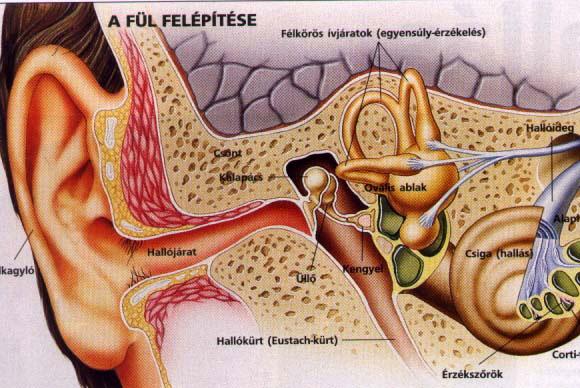 Mire utalhatnak a tünetek? - Látászavar, fülzúgás...