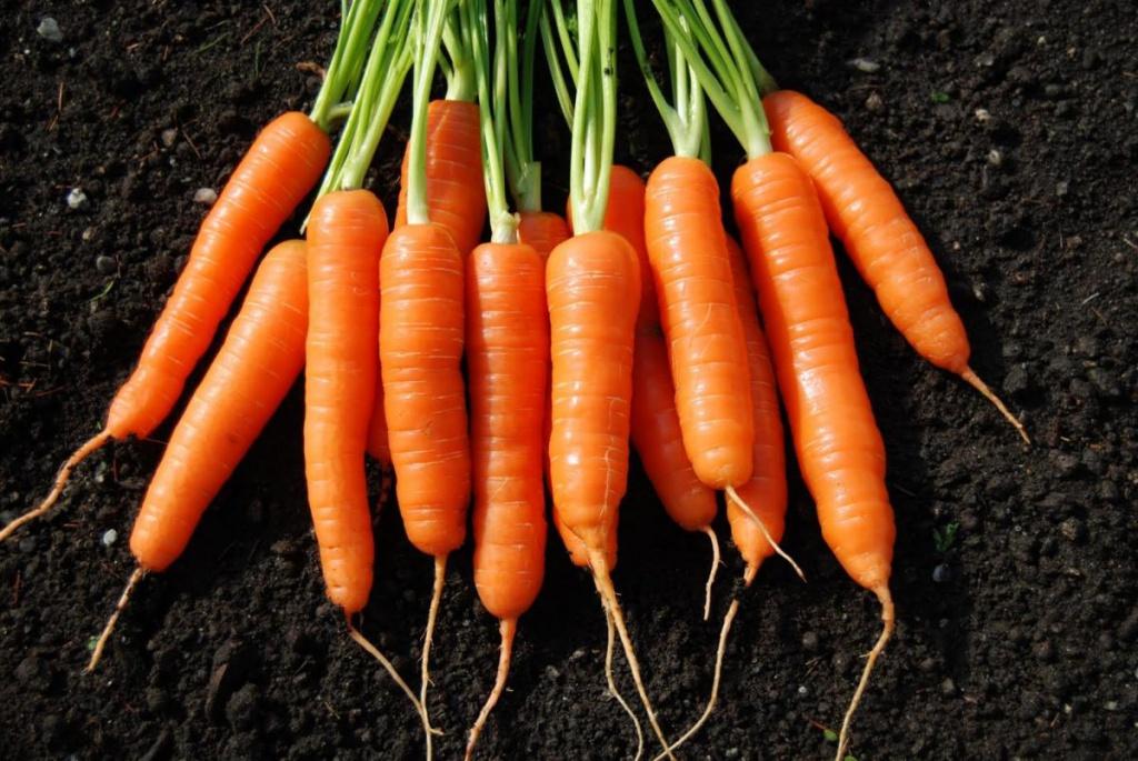 milyen zöldségek és gyümölcsök javítják a látást
