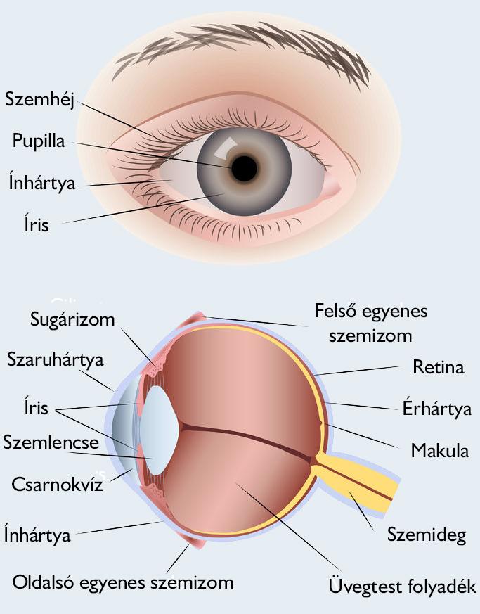 a jobb szem csökkent látásélessége)
