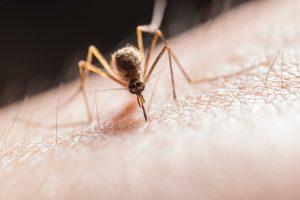 Így vedd fel a harcot a szúnyogok ellen! - Lakáskultúra magazin