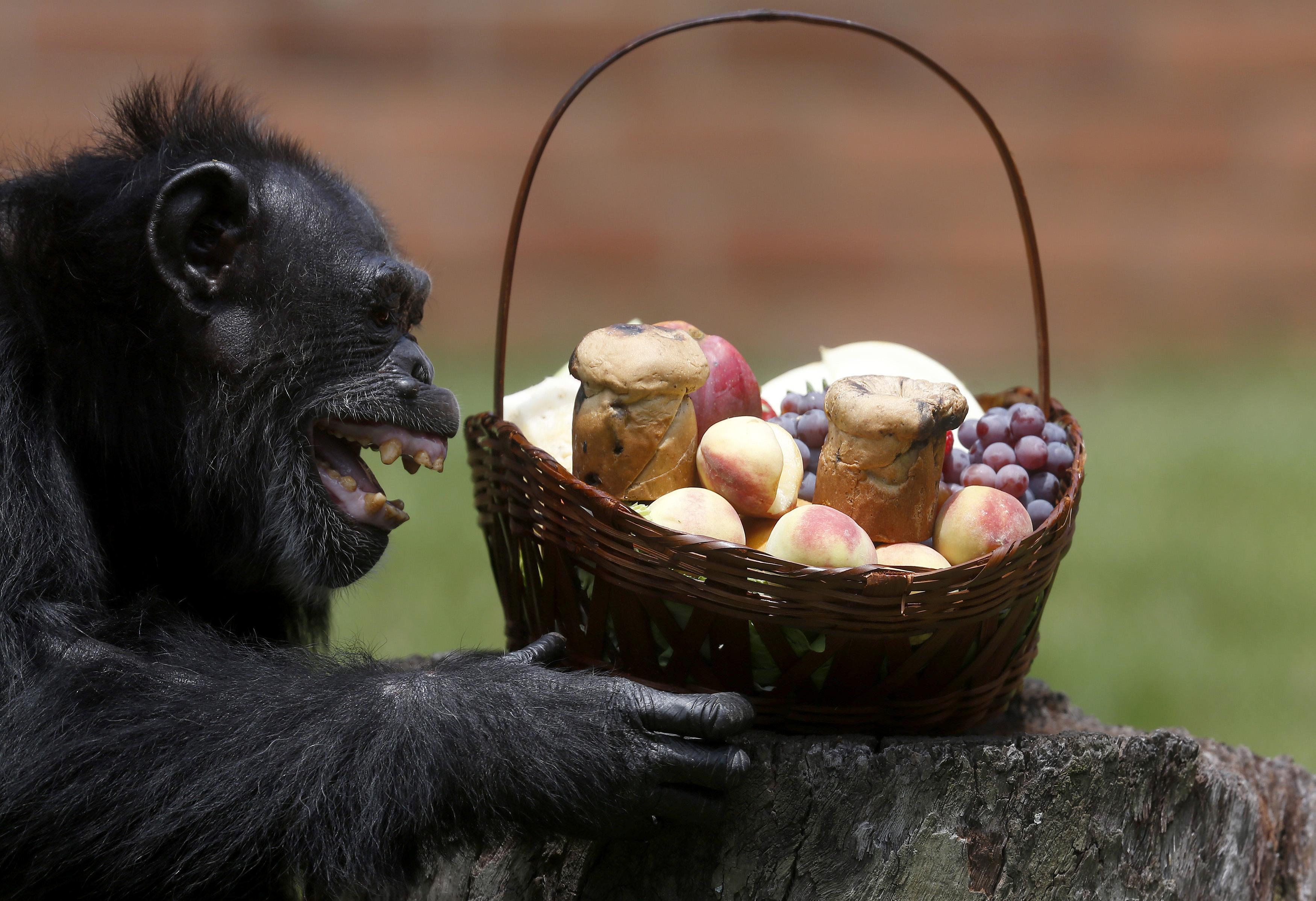 Ilyen klassz majom embernek való?