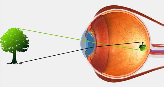 a látás útjának vizsgálata