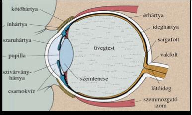 Lézeres olvasószemüveg-kezelés, ha nem szeretne szemüveget viselni.