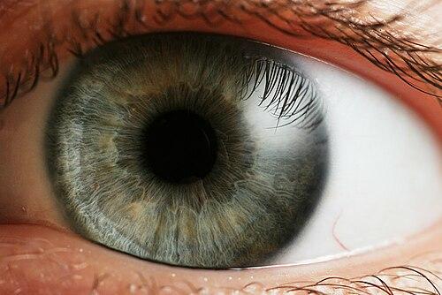 a szem normális látása)