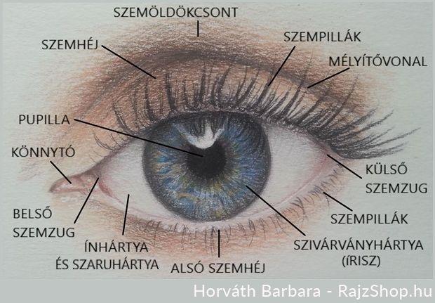 az egyik szemben romlik a látás A 45 éves látás élesen romlott