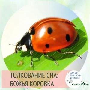 Borodina látomás)