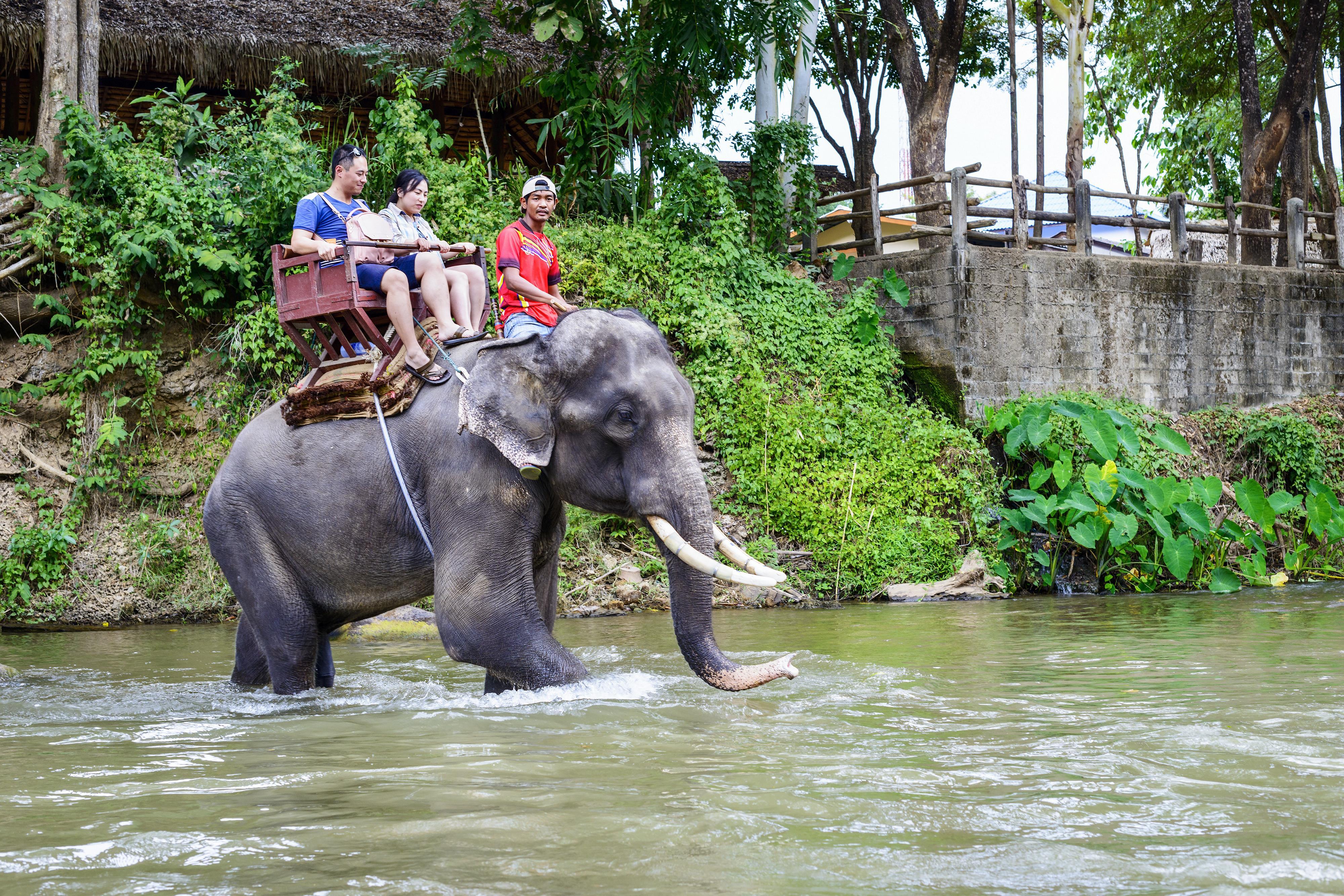 Kivégzés elefánt által - Execution by elephant - zuii.hu