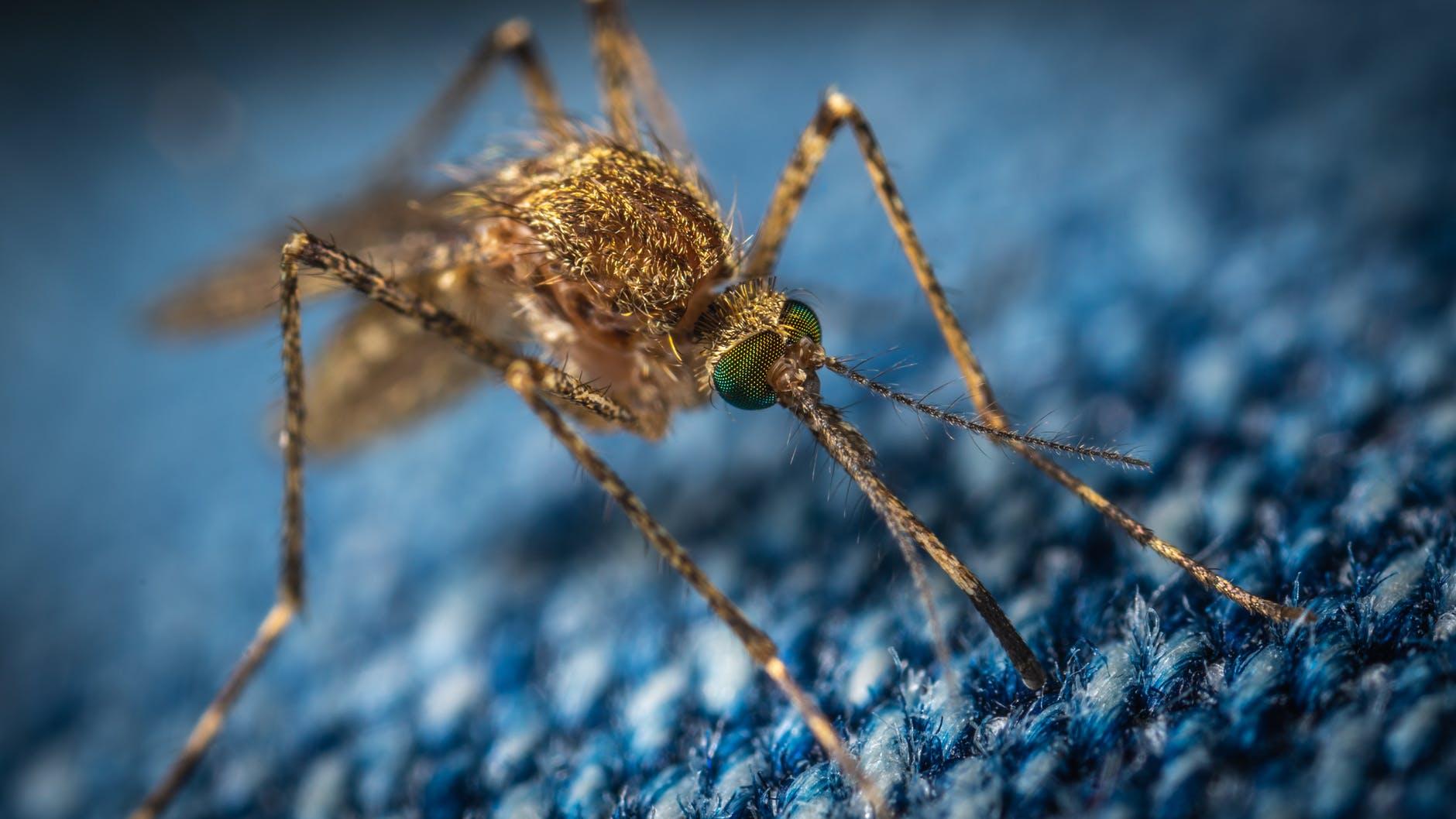 mi a szúnyog látványa