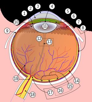 a pupillák kitágulnak és a látás romlik