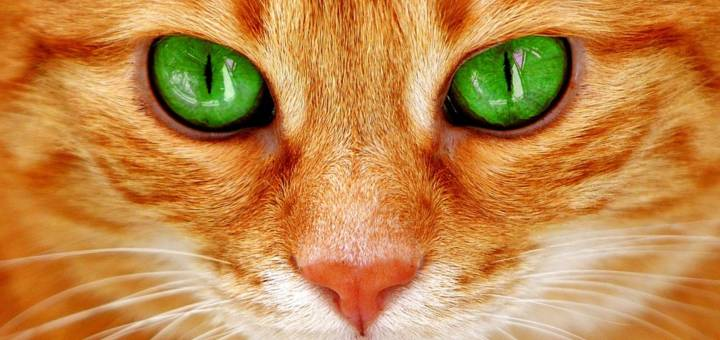 melyik állat jó látása