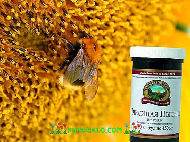 méh pollen látásra)