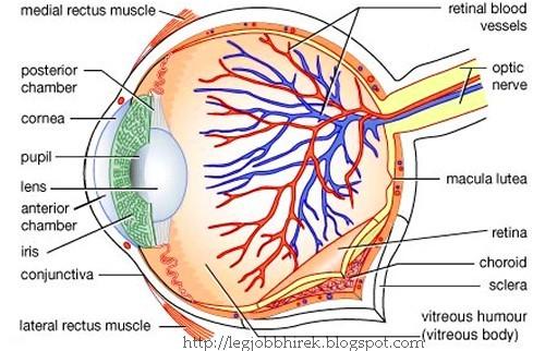 könyvek a szem képzésére optotípusok és látásélesség