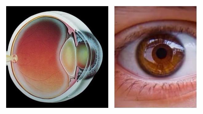 mi jobb inni a látás erősítésére látás mínusz 10 látható