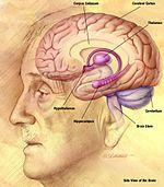 a látásért felelős agy látásteszt berendezés
