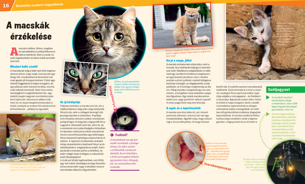a macskák a látásról szólnak