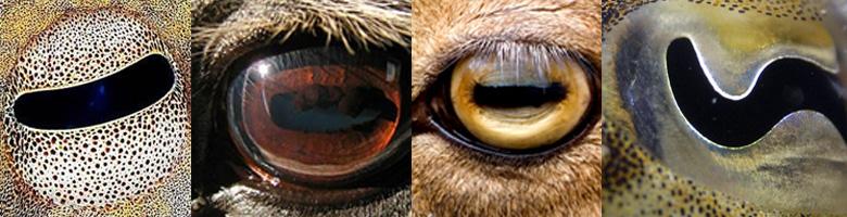 mi a tábla neve a látáspróbának eszközök a látás helyreállításához