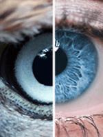a látáslátás helyreállítása lézerrel