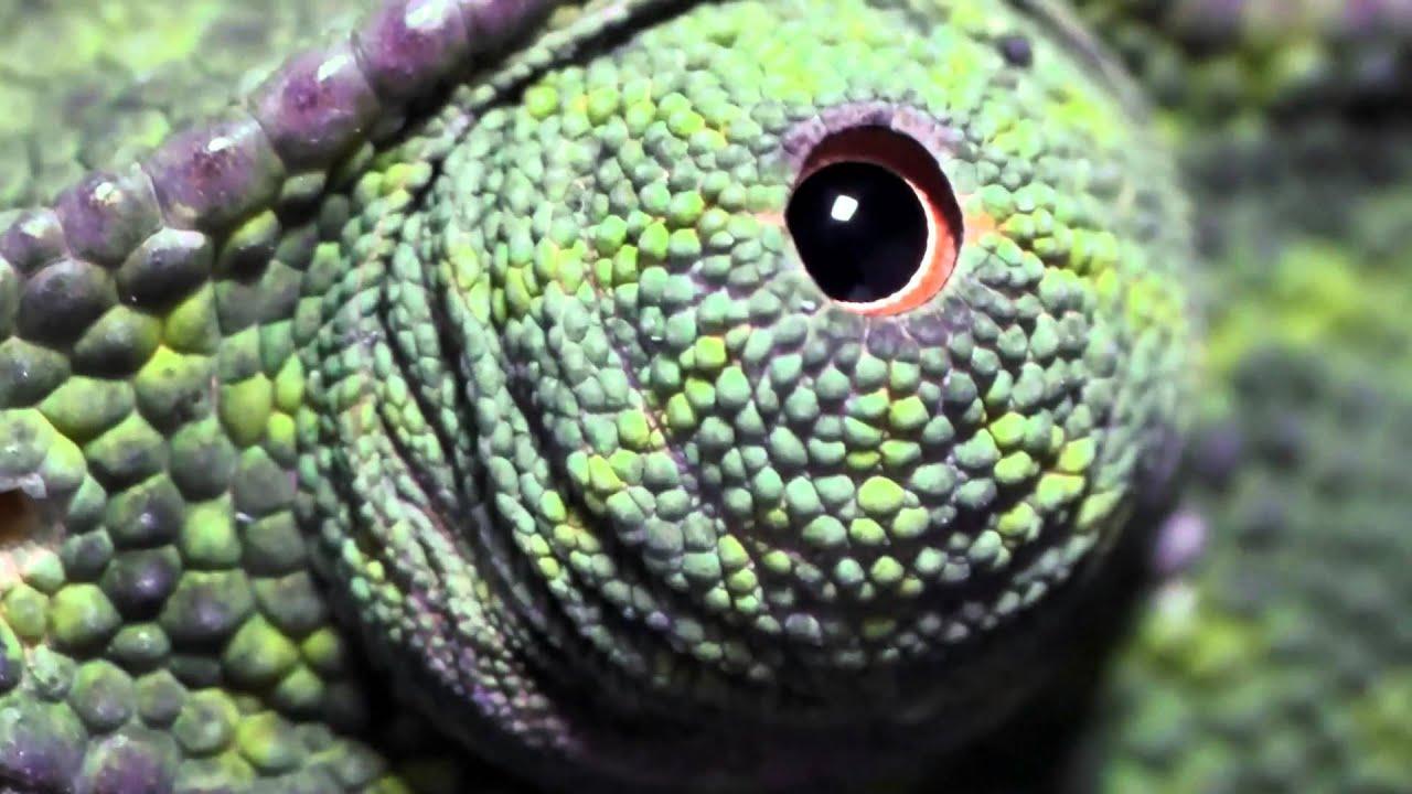 A 10 leghihetetlenebb szem az állatvilágban
