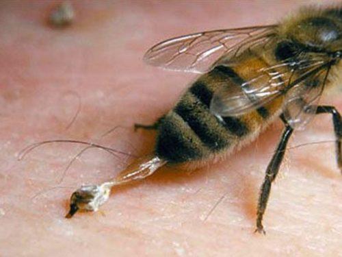 méh pollen és látás