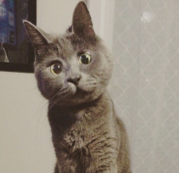 amikor a cica látást fejleszt a látás 13 évesen romlik