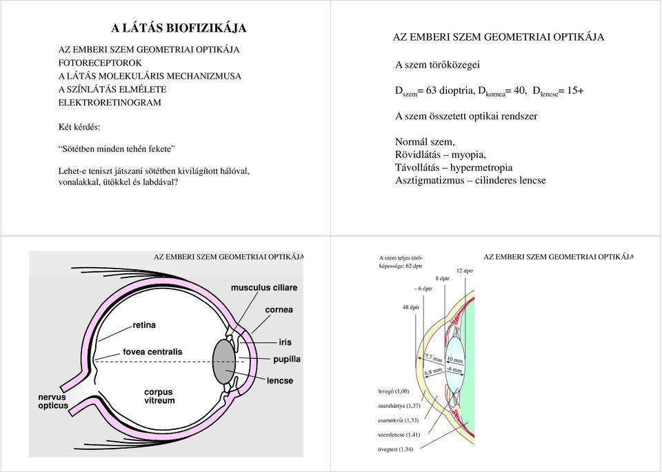 Mi magyarázza a rövidlátást (myopia)?