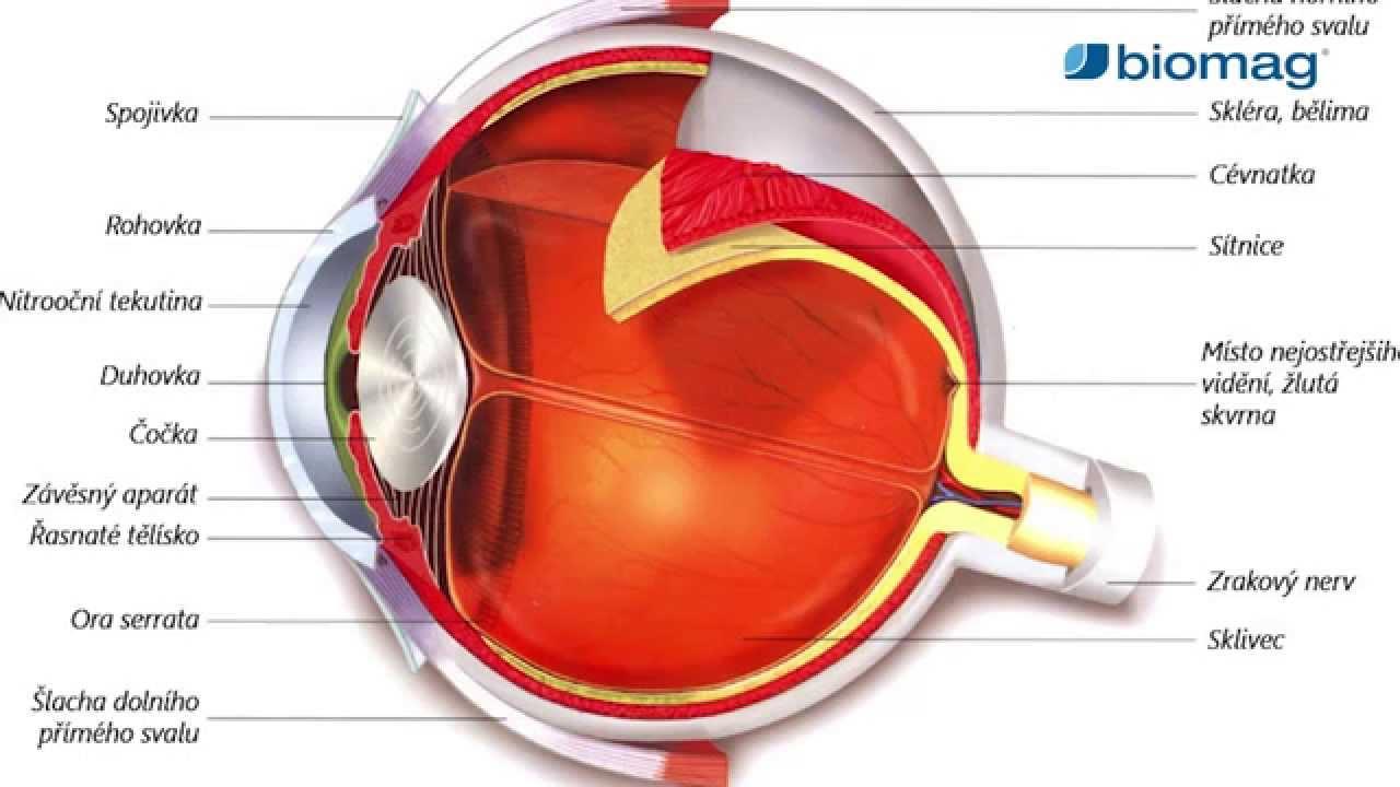 myopia kezelés ügyfelek véleménye)