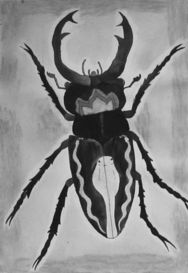 bogár boszorkány orvos látása
