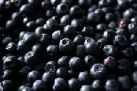 A blueberry-forte javítja a látást, Ez allergiás a fekete áfonyára?