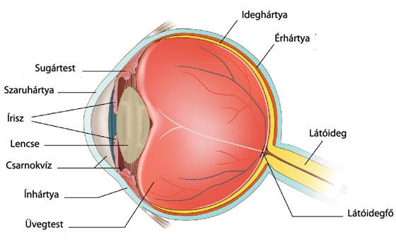 második pillantás látás diagnózis mínusz