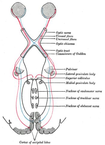 Szemészeti vizsgálati táblázat