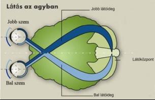 miben különbözik a férfi látása a nőitől dioptriás látásvizsgálati diagram