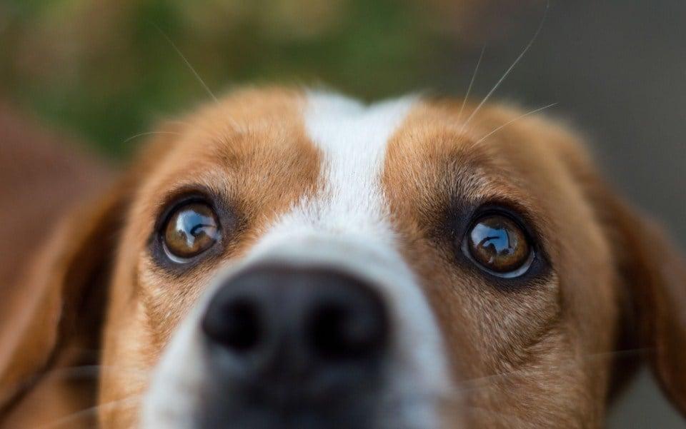 Hallásproblémák kutyáknál - 10 tipp a nyugodt mindennapokhoz - Jó tudni!