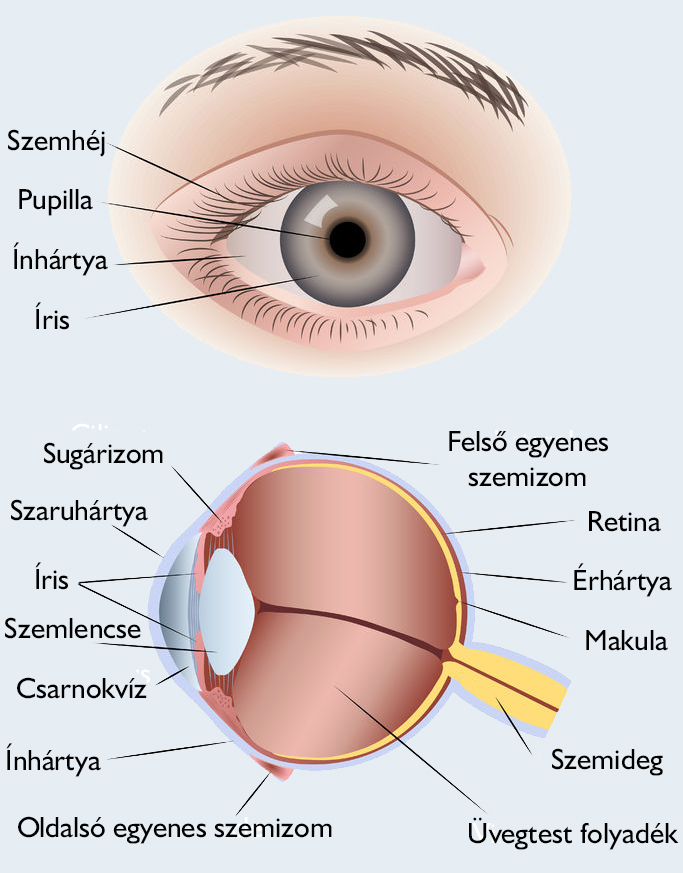 a látás elmozdulása