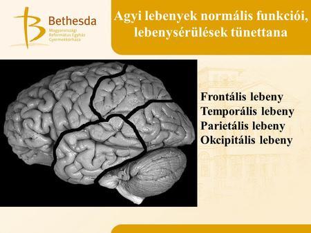 agy a látáshoz