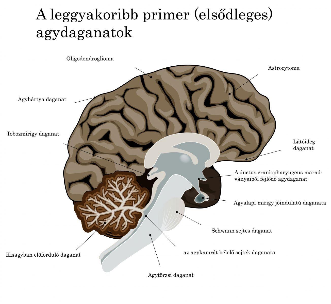 a látás és az agy kapcsolata)
