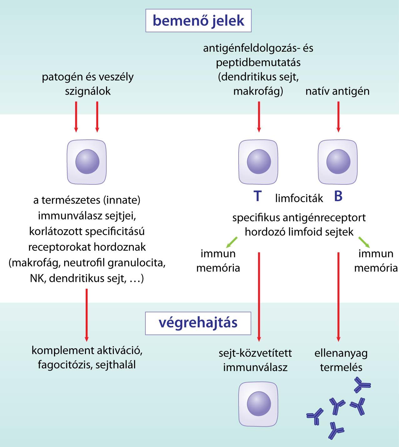immunitás látás