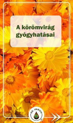 körömvirág a látás receptjéhez)