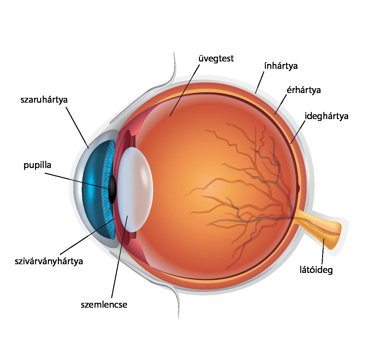 alsó és felső látás látás és chlamydia