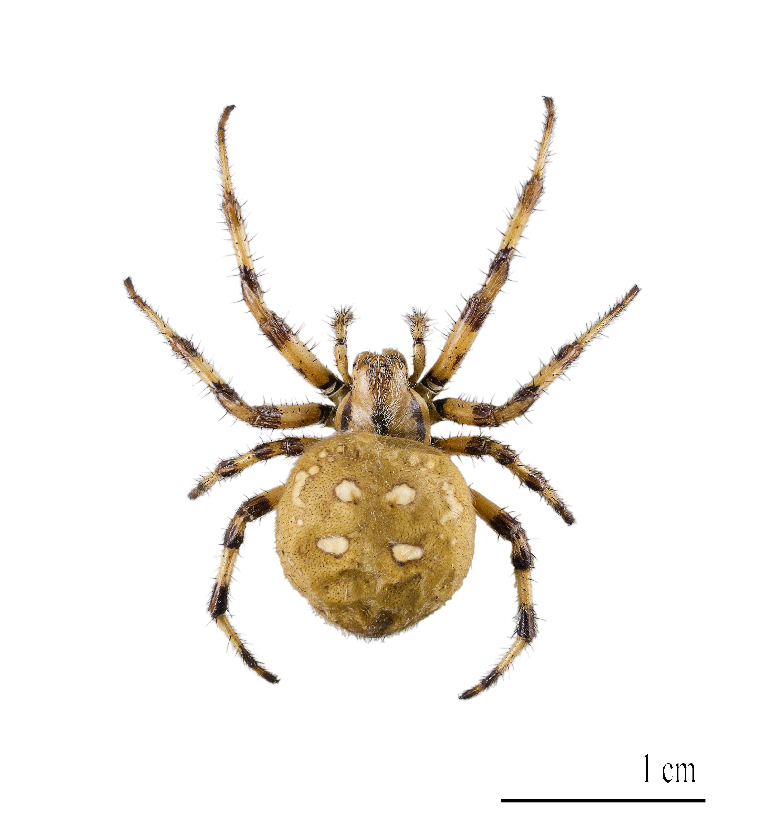 látás pókháló