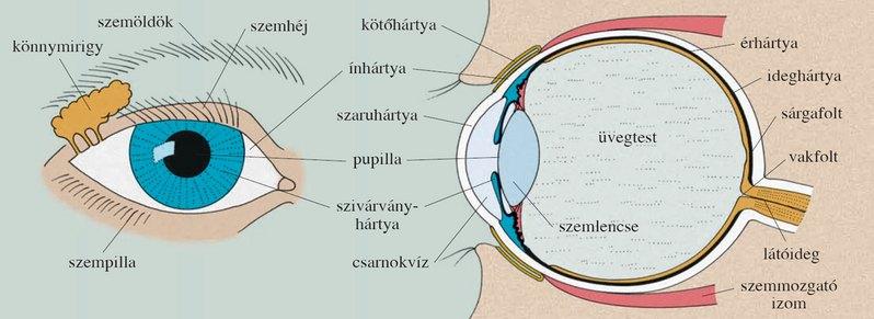 látás tanuláskor