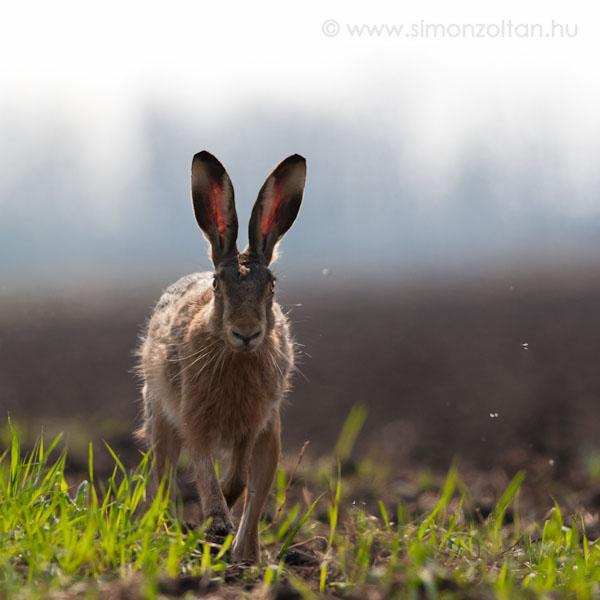 melyik állat jó látása)