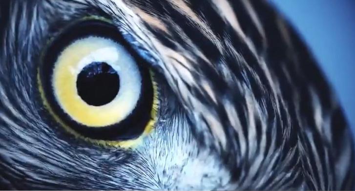 Hogyan lát a sas - hogyan lát a sasszemű ember?