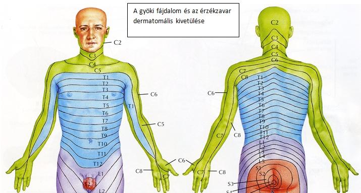 Miként kezelhető a nyaki gerinc eredetű szédülés? - zuii.hu