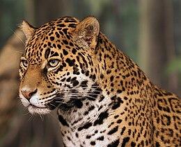 Az állatok különböző látásmódjai az ember látásával összehasonlítva [Videó] | Érdekes Világ